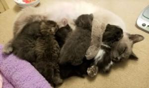 Wendy & Kittens