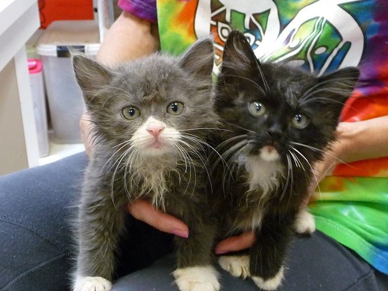 STAF event at indigenous~ adopt a kitten or two