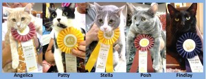 Cat Show collage - 9-2014 - light blue cropped