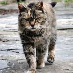 feral_cat 2