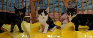 Glitz-Shimmer-Bling