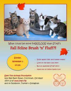 Fall Feline Fun Kitty Brush 'n' Fluff (2019 flyer)