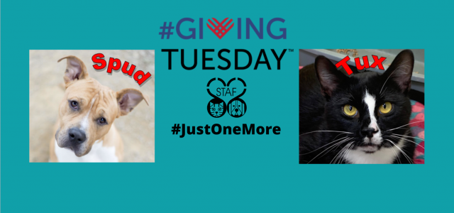 #GivingTuesday – Click here to donate!