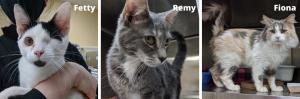 Fetty-Remy-Fiona