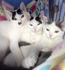 Cat ambassadors