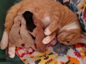 Ember-Kittens