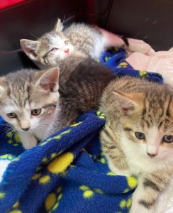 Kaitlynn-Kittens